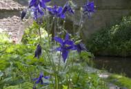 Flower on Macclesfield Canal New Mills