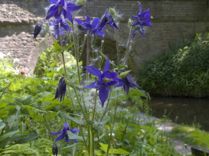Flower on Macclesfield Canal New Mills
